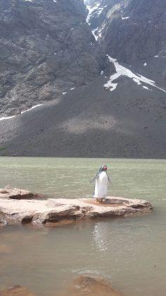 Pingüino de metal
